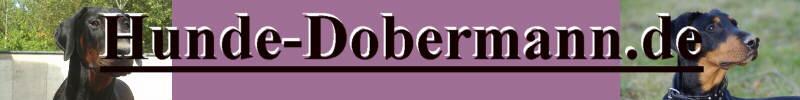 Der Dobermann Infos zur Rasse auf hunde-dobermann.de